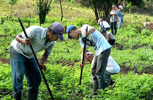 csm_klimaschutzprojekt-nicaragua-7186-1
