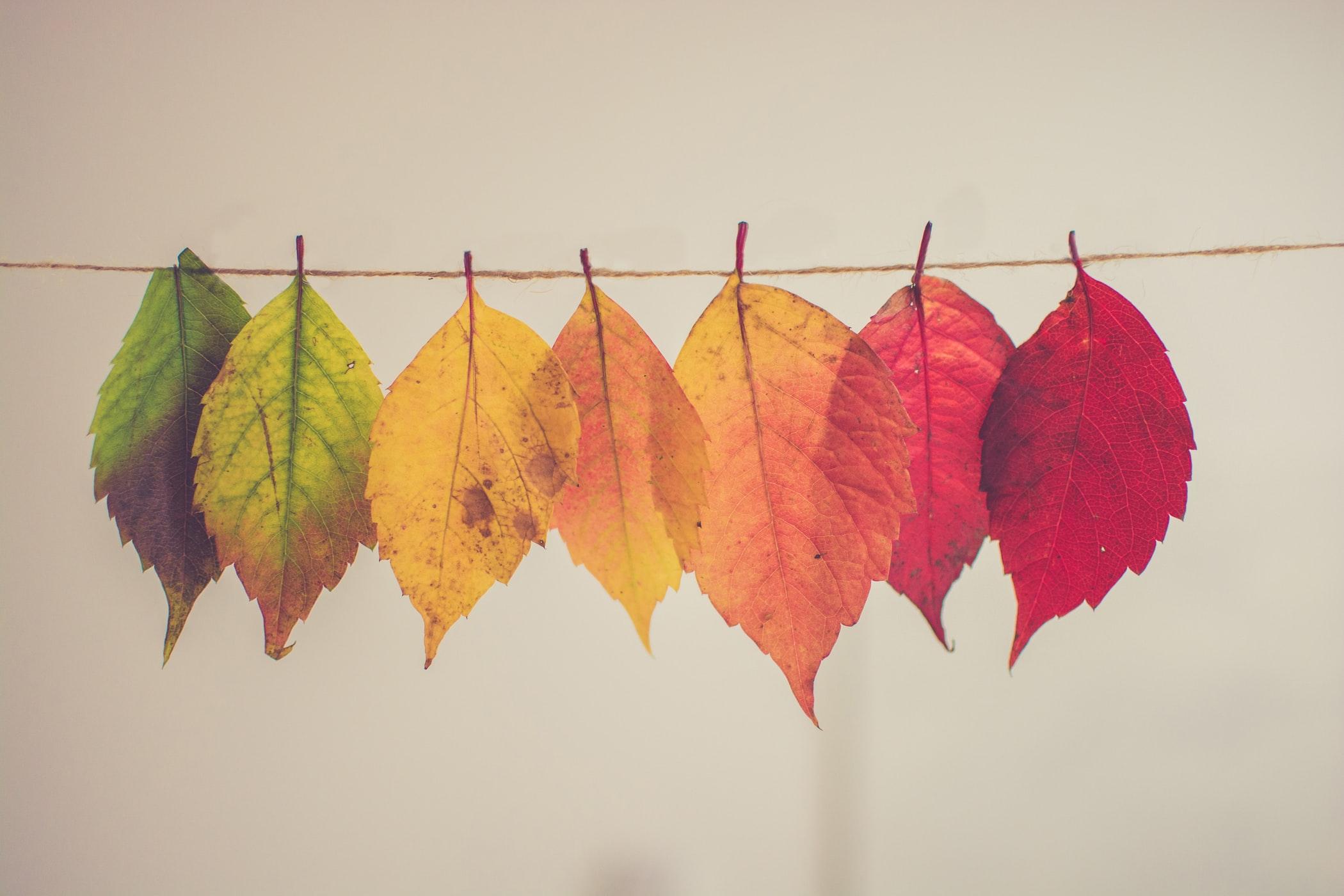 10 kreative DIY Herbstdeko Ideen